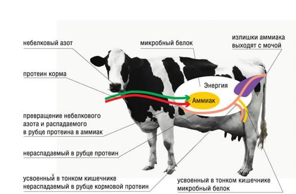 Схема движения протеина